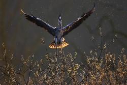 GDT Naturfotograf des Jahres 2012